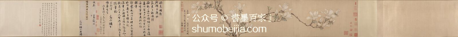 明代-文徵明《白玉兰图卷》27.9x133